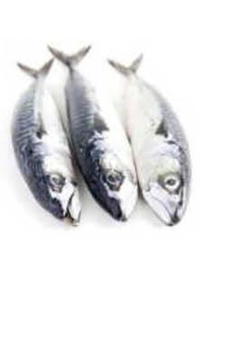 Riba proteini